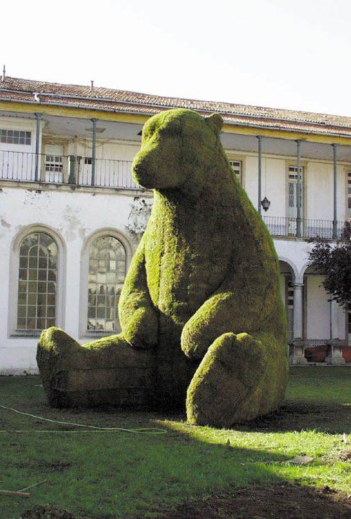 Un oso en Coimbra