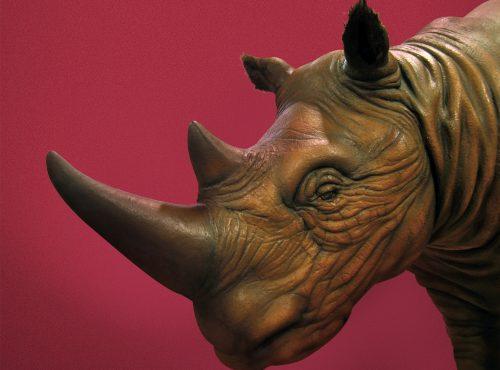 Rinoceronte de los bosques